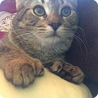Adopt A Pet :: Lila 4 - Plainville, MA