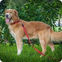 Adopt A Pet :: Buddy 701 - Naples, FL