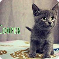 Adopt A Pet :: *COOPER - Sugar Land, TX