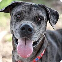 Adopt A Pet :: ARMANI - Kyle, TX