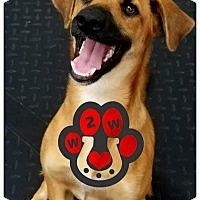 Adopt A Pet :: Lil Kim - Plainfield, IL