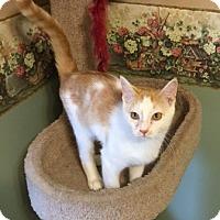 Adopt A Pet :: Nemo - Warrenton, MO