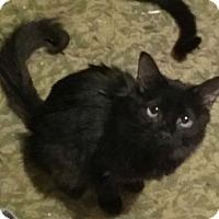 Adopt A Pet :: Missy - Yucca Valley, CA