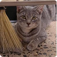 Adopt A Pet :: Hera - Trevose, PA