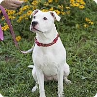Adopt A Pet :: Princess - Middletown, DE