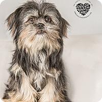 Adopt A Pet :: St. Nick - Inglewood, CA