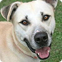 Adopt A Pet :: Buck - Lufkin, TX