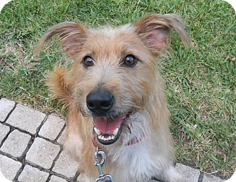 Terrier (Unknown Type, Medium) Mix Dog for adoption in Orange Park, Florida - Olivia