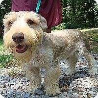 Adopt A Pet :: Ike - Staunton, VA