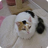 Adopt A Pet :: Amber - Laguna Woods, CA