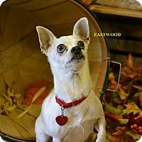Adopt A Pet :: EASTWOOD - Higley, AZ