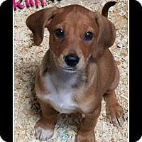Adopt A Pet :: TANGIE PUPPIES - Pompton Lakes, NJ