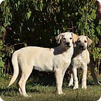 Adopt A Pet :: Belinda - Charlemont, MA