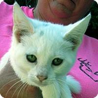 Adopt A Pet :: Blanca - Germantown, MD