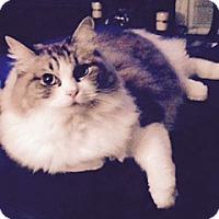 Adopt A Pet :: Baxter - Bentonville, AR