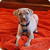 Adopt A Pet :: Spanky - Houston, TX