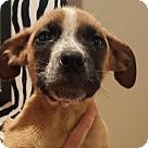 Adopt A Pet :: ALEXIS