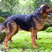 Adopt A Pet :: Jayden - Penngrove, CA