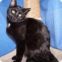 Adopt A Pet :: Gypsey - Colorado Springs, CO