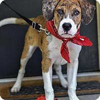 Adopt A Pet :: Clyde - Baton Rouge, LA