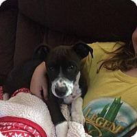 Adopt A Pet :: Brandan - Sacramento, CA