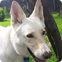 Adopt A Pet :: Polly - Denver, CO