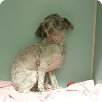 Adopt A Pet :: Iris - Bernardston, MA