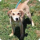 Adopt A Pet :: Lafayette