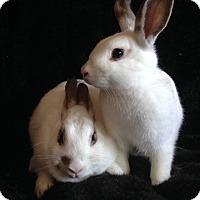 Adopt A Pet :: Ireland & Oisin - Watauga, TX