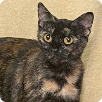 Adopt A Pet :: Patches - Elmwood Park, NJ