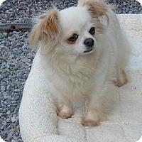 Adopt A Pet :: Ally - Barco, NC