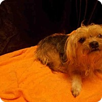 Adopt A Pet :: *MAZIE - Upper Marlboro, MD