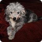 Adopt A Pet :: Gypsie Girl