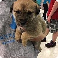 German Shepherd Dog Mix Dog for adoption in Maple Grove, Minnesota - Pepper