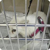 Adopt A Pet :: Cotton - Irving, TX