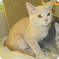 Adopt A Pet :: Scurry - Rochester, MN