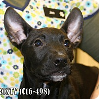 Adopt A Pet :: Frosty - Tiffin, OH