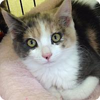 Adopt A Pet :: Belle - San Jose, CA