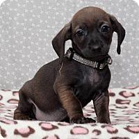 Adopt A Pet :: Joanie Bradford - Hillside, IL