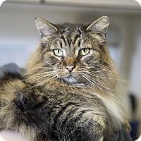 Adopt A Pet :: Ralph - Herndon, VA