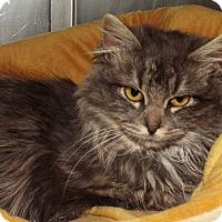 Adopt A Pet :: Mona - Grants Pass, OR