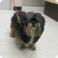Adopt A Pet :: Stanley - Gilbert, AZ