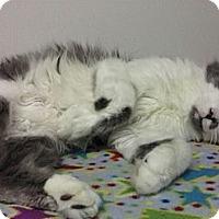 Adopt A Pet :: Frankie - Ridgecrest, CA