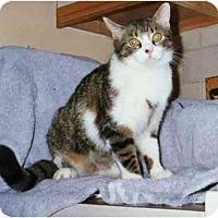 Adopt A Pet :: Miranda - Bedford, MA
