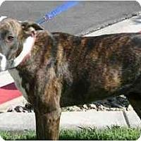 Adopt A Pet :: Totemy - Gilbert, AZ