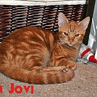 Adopt A Pet :: Bon Jovi - Surprise, AZ