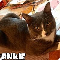 Adopt A Pet :: Frankie - River Edge, NJ