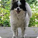 Adopt A Pet :: Tia (in Virginia)