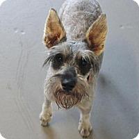Adopt A Pet :: Whiskey Pop - Atlanta, GA