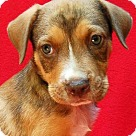 Adopt A Pet :: Buzz Aldrin